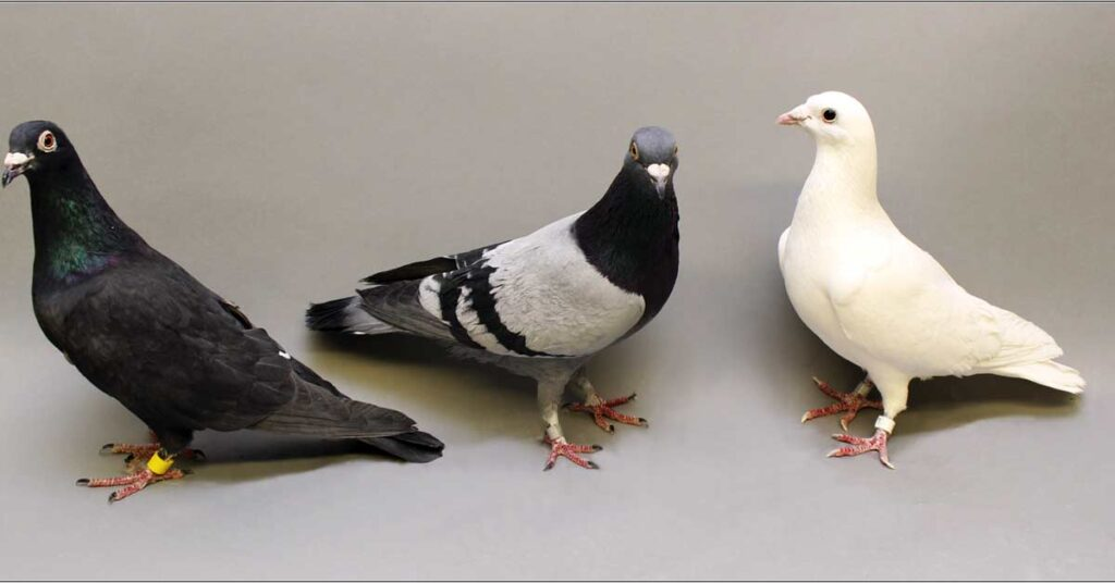 every pigeon poop is an official property of the crown