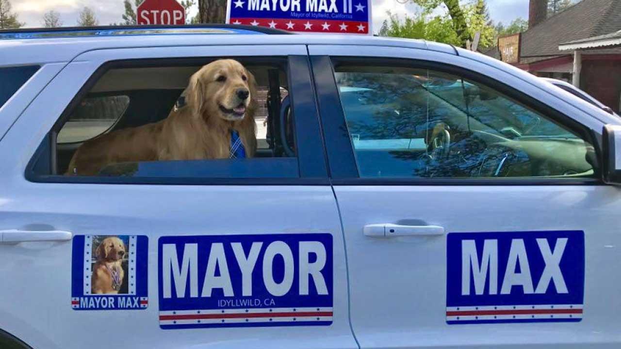 Mayor Max 2