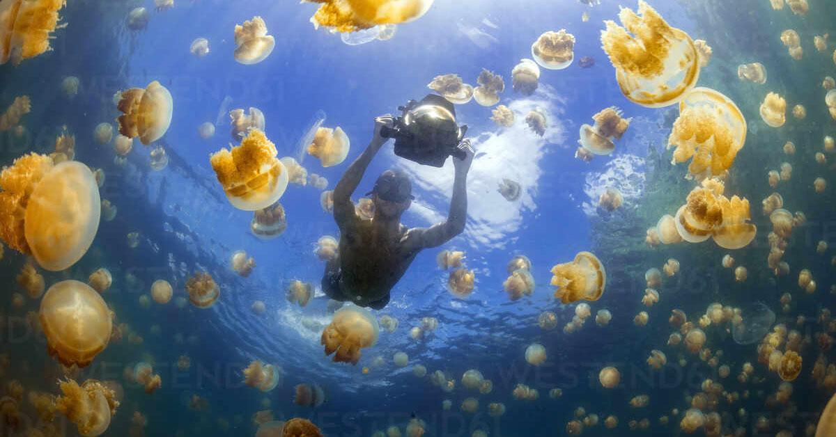 Lake has Millions of Jellyfish
