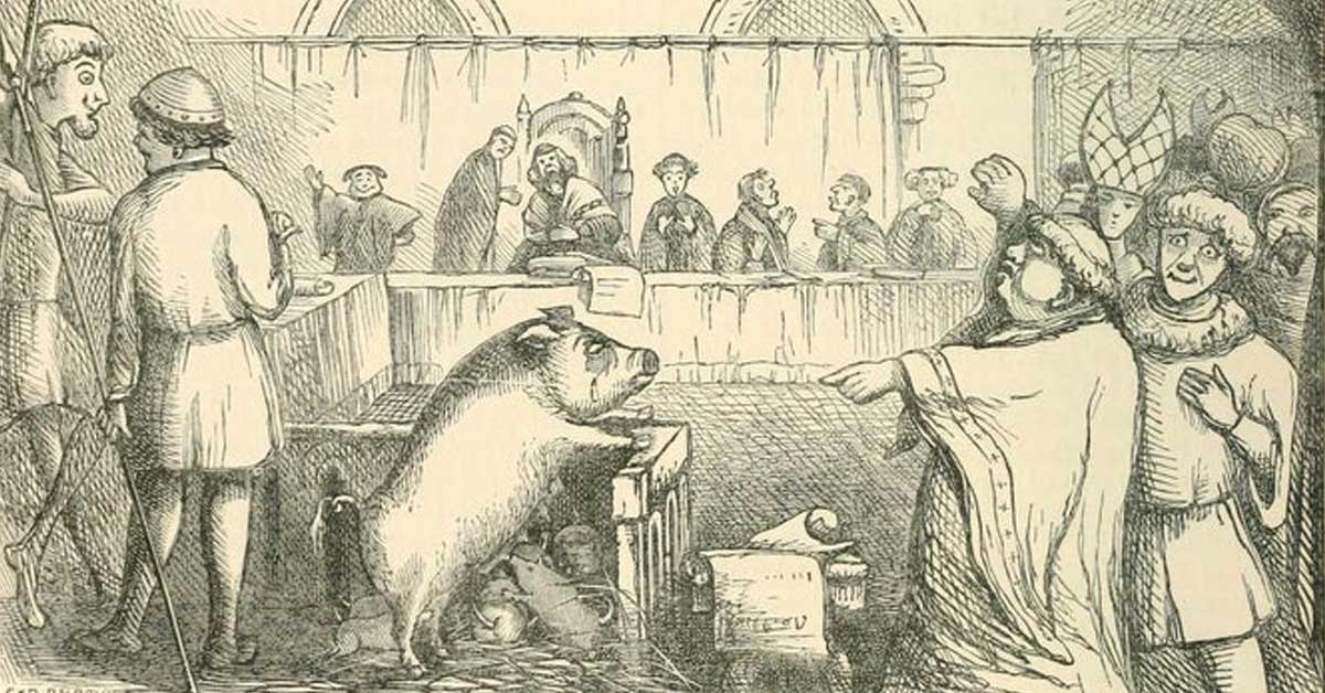 The 13th century pig who faced trial